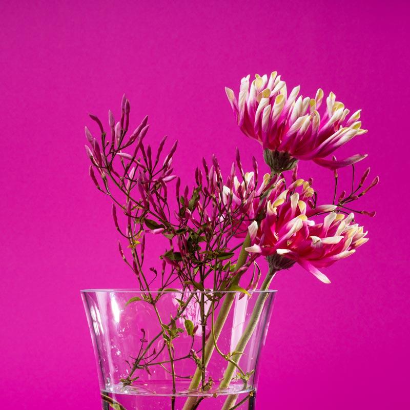 Кришталева сила для вашої квітки